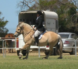 Lena riding a Fjord Stallion at Melbourne Summer Royal