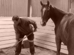 One of my help exchange members mucking out embers stable